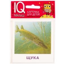 Пресноводные рыбы.  (Умный малыш. Набор карточек для детей)