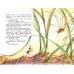 Как муравьишка домой спешил (Детская Библиотека)